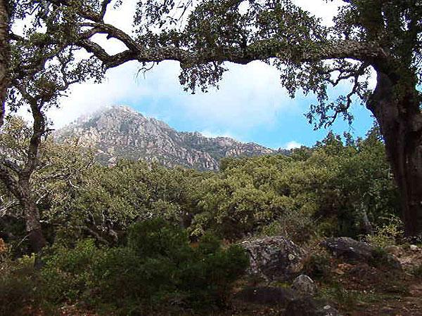 El Picacho - Parque Natural los Alcornocales