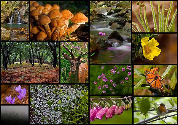 Naturaleza en Los Alcornocales